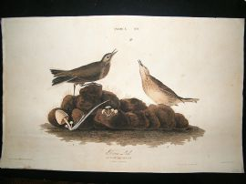 Audubon Havell: C1830 Brown Lark. Folio 1st Edition. Hand Col